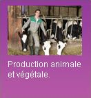 Productions animales